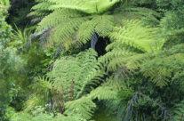 New Zealand – Abel Tasman NP