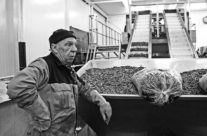 Preparing for the fish auction, harbour of Harlingen